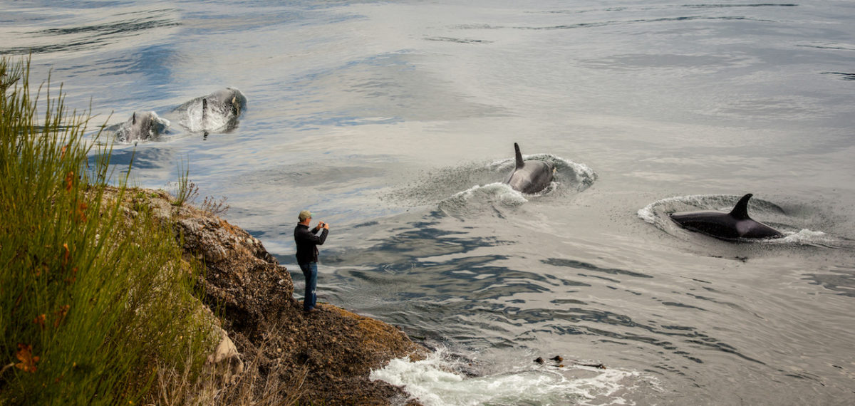 Man Photographing Whales