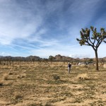 An escape to Indian Wells and the desert