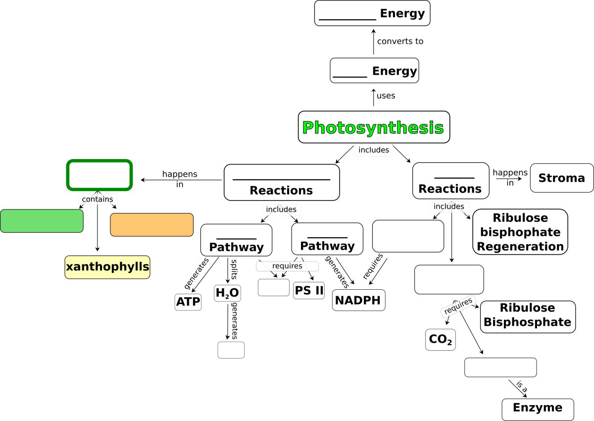 Photosynthesis Concept
