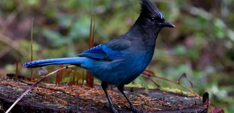 CORE Hunter Education Bird Identification Quiz CORE Exam Challenge