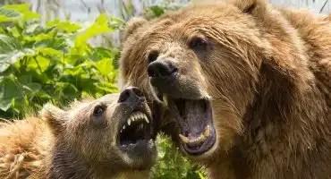 Predatory Wildlife & Bear Defence – Shotgun & Rifle Certification – Sept 10