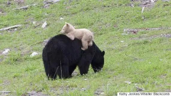 Bear BC Firearms Academy