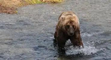 Predatory Wildlife & Bear Defence – Shotgun & Rifle September 17, 2021