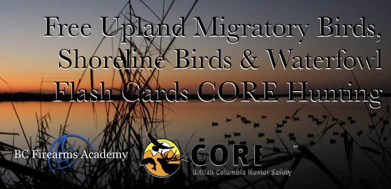 Free Upland Migratory Birds, Shoreline Birds & Waterfowl Flash Cards CORE Hunting