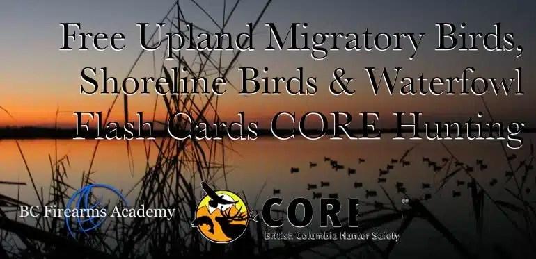 Free Upland Migratory Birds, Shoreline Birds & Waterfowl Flash Cards CORE Hunting