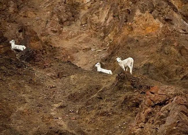 Monitoring Wildlife Populations