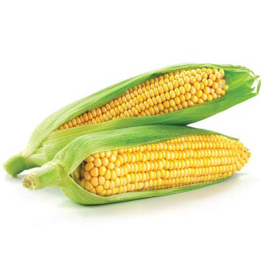 corn for dehydration