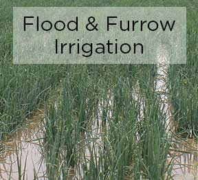 flood and furrow irrigation wastes water and is not sustainable