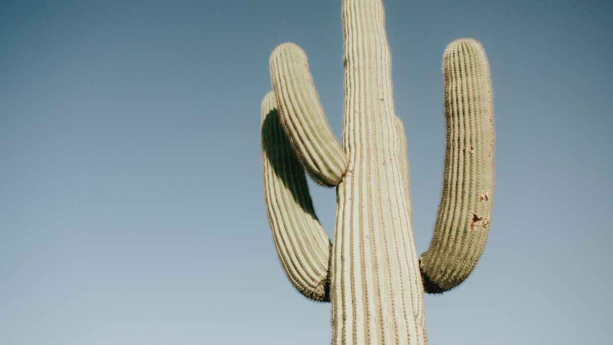 low angle photo of cactus