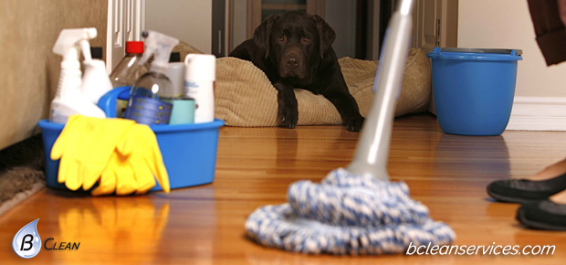 dusted-and-mopped-to-perfection-let-our-trained-cleaning-experts-make-your-home-and-office-sparkle-indianapolis-b-clean-services-V2