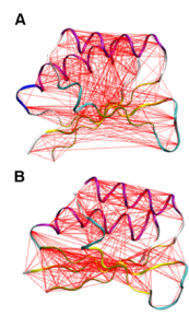 Carluccio 2013 identified acterations in the connections between both sides of the enzyme. A is the wild type and I65S mutation. Drastic changes in the correlations identified by the red lines are decreased in the mutant.