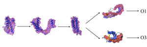 Figure 7. Different oligomer formations of scrapie prion protein. (Chakroun et. al. 2010)