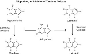 Figure 1: The structure of Allopurinol is very similar to Hypoxanthine (rearrangement of adjacent carbon and nitrogen). Allopurinol inhibits Xanthine Oxidase and prevents the formation of uric acid, thus preventing gout. Source: Google Image