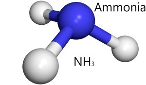 Structure of Ammonia Source: http://www.newhealthadvisor.com/Normal-Ammonia-Levels.html