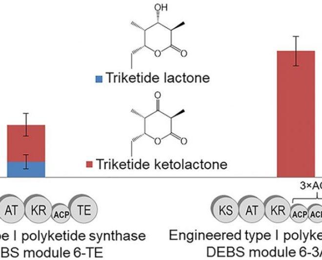 Spotlight 1: Development of a Tandem ACP Polyketide Synthase