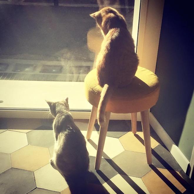 Romeow Cat Bistrot gattini