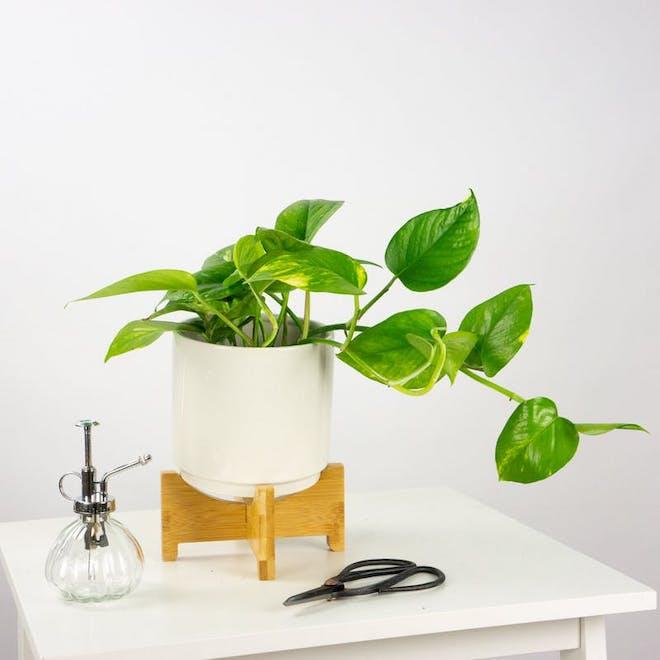 poto plantas de interior