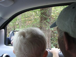 Checking out the deer in the woods.