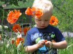 This is one of my favorite shots of my son. He loves poppies.