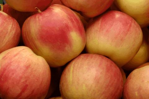 Certified organic apples