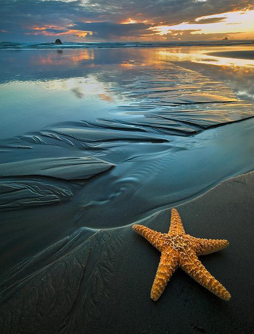 Starfish and sunset - Beach Bum - by Rick Lundh