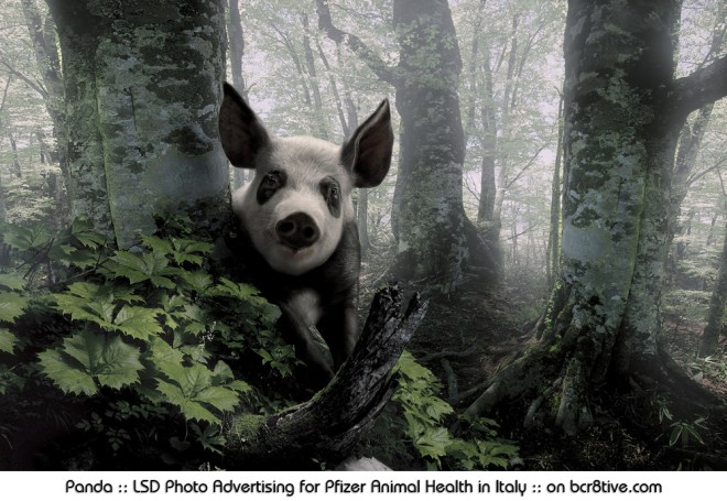 Panda :: LSD Photo Advertising for Pfizer Animal Health in Italy :: on bcr8tive.com