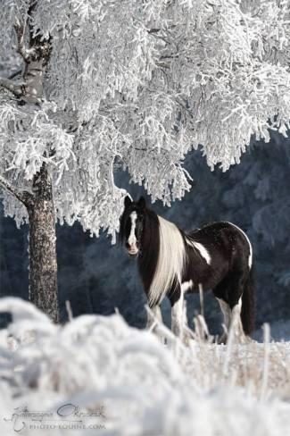 Katarzyna Okrzesik Snow Horse