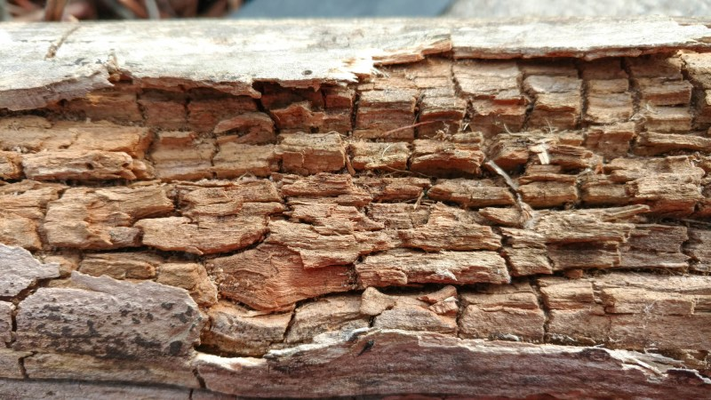 BCT Lecture: DECAY OF WOOD IN STRUCTURES: ESTABLISHMENT, DETECTION, DESIGN PROBLEMS AND PROTECTION @ Design Building 170