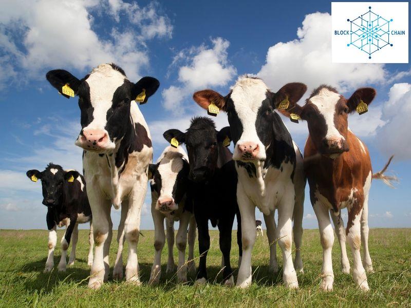 Food chain blockchain UK Food Standards Agency