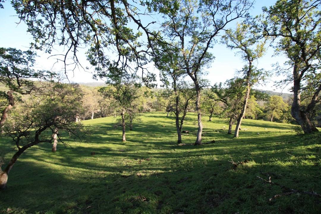 Ranch 4 (2)
