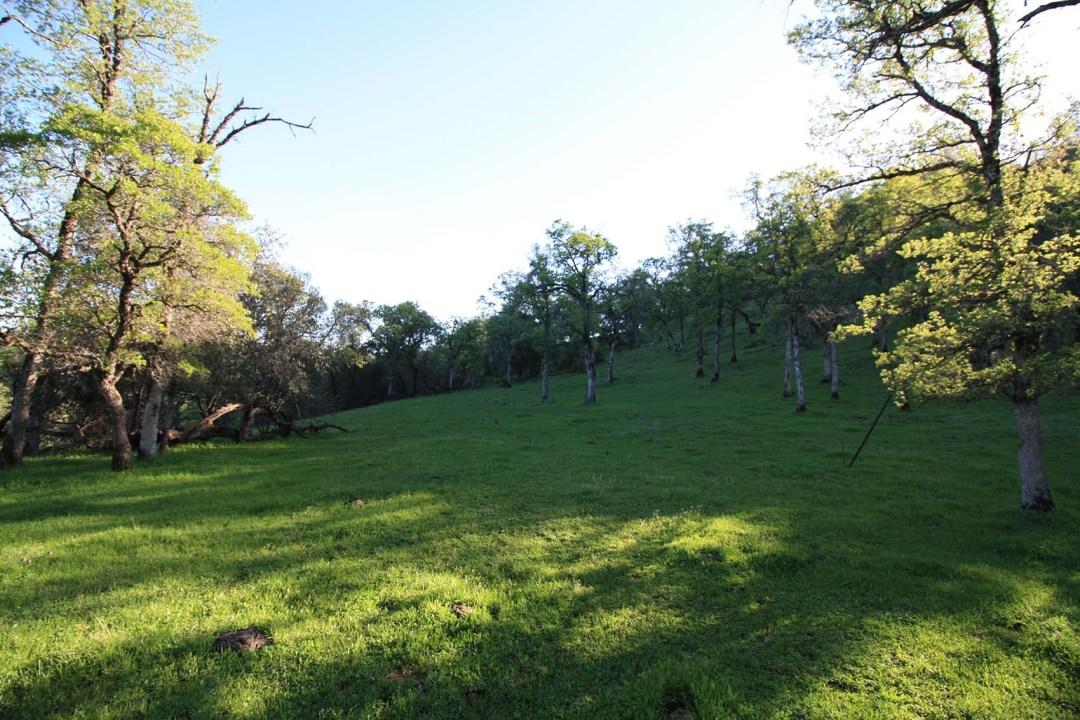Ranch 6 (11)