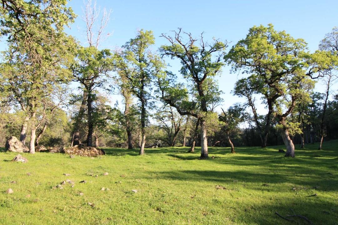 Ranch 6 (14)