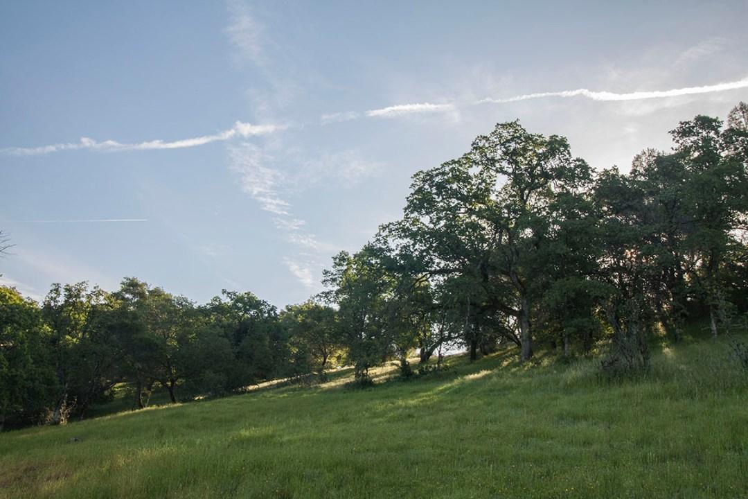 Ranch 3 4-28-19 IMG_2992
