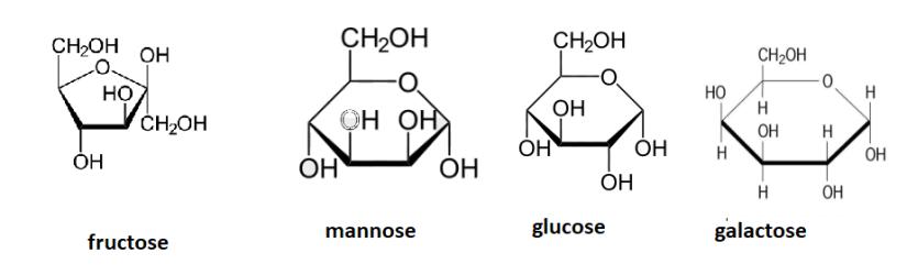 Ganodermia_sugars