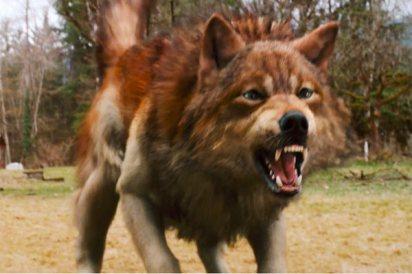 jacob-full-wolf-form-freeze-frame.jpg