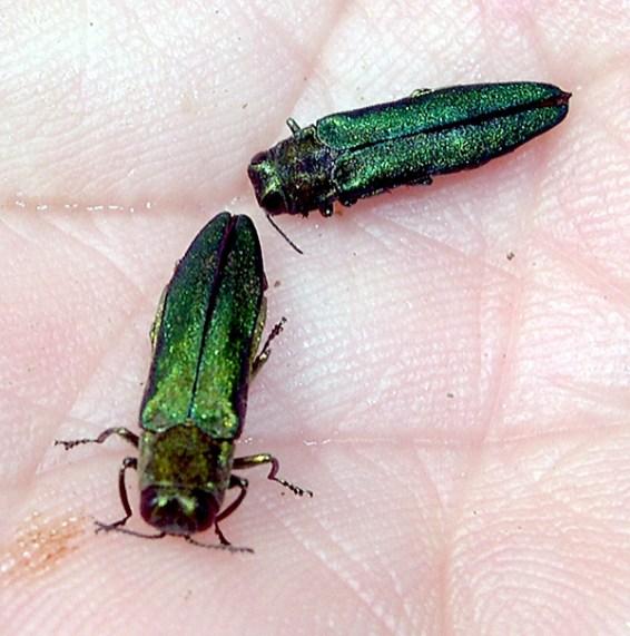 070109_beetle1.jpg