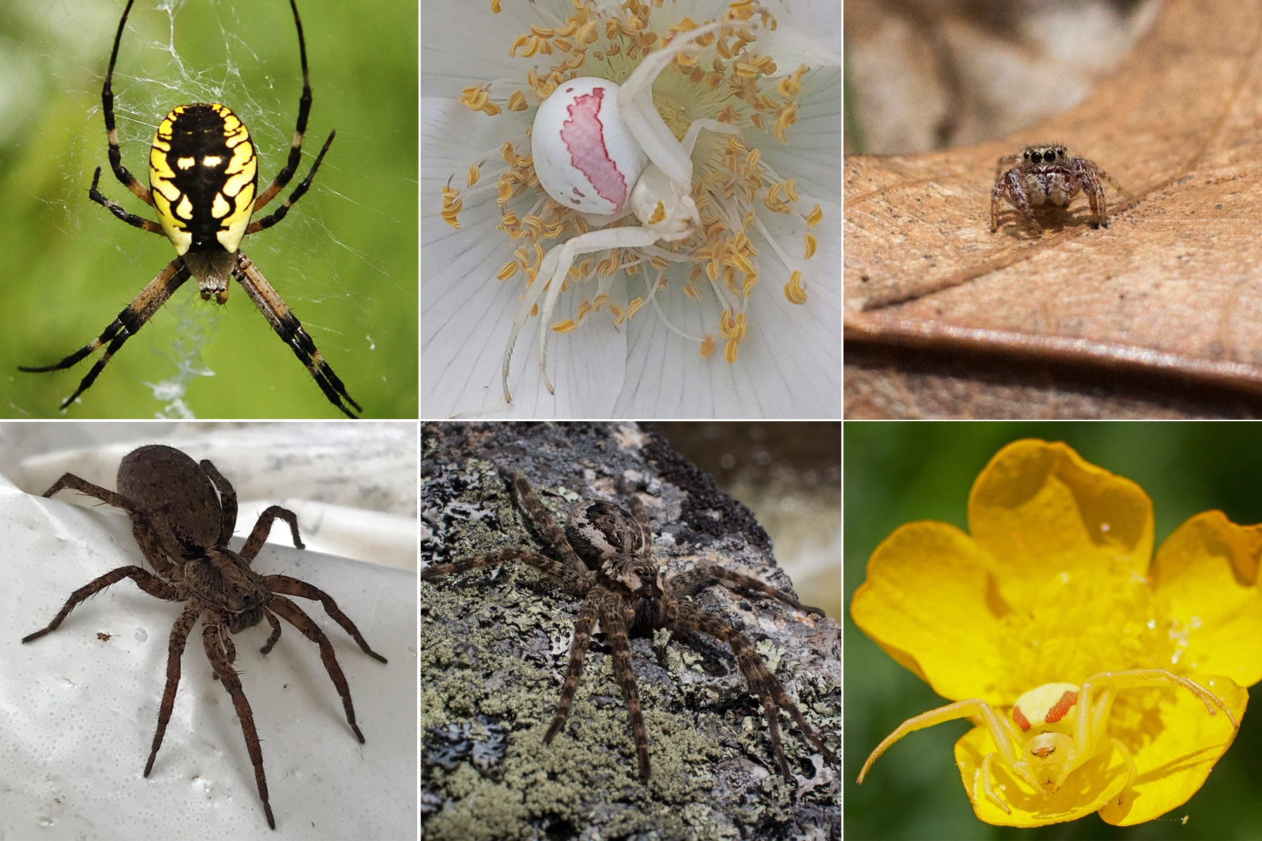 Maine Is Home To Hundreds Of Spider Species Here S A Guide To The Ones You Might Find