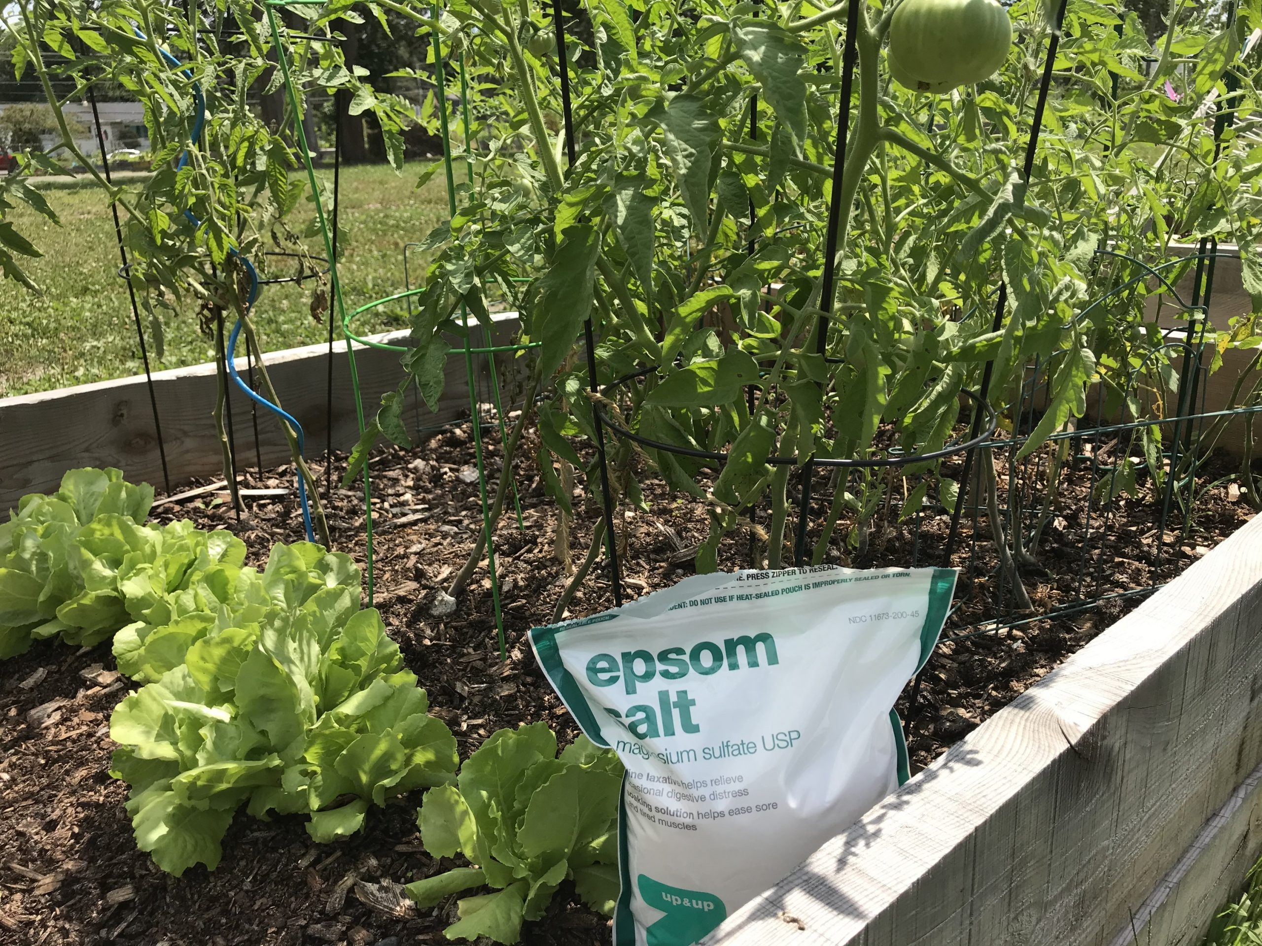 Can Epsom Salt Save Your Slow Growing Plants