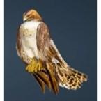 [Tier 1] Brown Hawk Guide