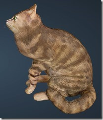 Striped Cat Side