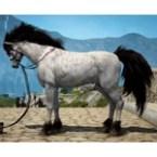[Tier 7] Horse