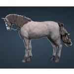 [Tier 1] Horse