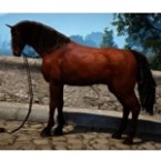 [Tier 2] Horse