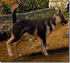 Tier 3 Shepherd Dog 2 Side