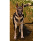 [Tier 3] Shepherd Dog