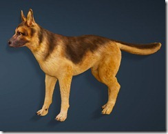 bdo-shepherd-dog-pet-2