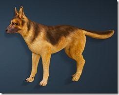 bdo-shepherd-dog-pet-2