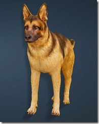 bdo-shepherd-dog-pet