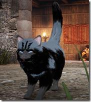 bdo-tier-3-cat-2
