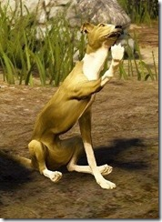 bdo-tier-3-dog-7